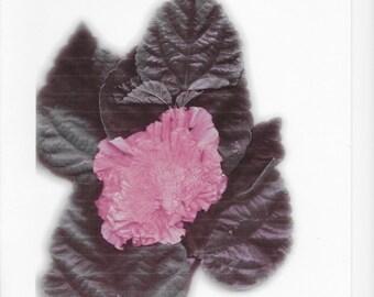 Print f Dried Hibiscus Blossom