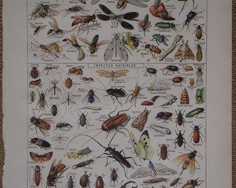 Vintage French Insect drawings 'Insectes' by Demoulin, Larousse Universel Published 1922 in pictures of insects, insect art