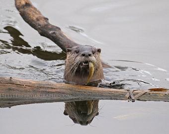 River otter, otter, fish, pond, wildlife, otter with fish, Oregon, wildlife photograph,