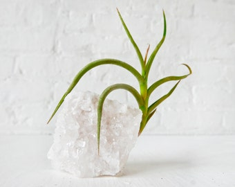 Crystal Quartz Tall Air Plant Garden - Home Garden Crystal Terrarium - Gardener Naturalist Gift Ideas - Nature Planter Holder