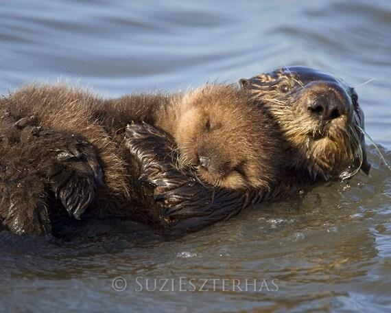 Nursery Art, Mom and BABY SEA OTTER Photo Print,  Baby Animals, Mom and Baby Animal Photograph, Kids Room, Nursery Wall Art, Ocean Nursery