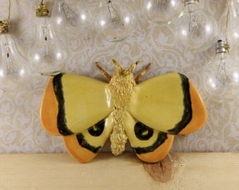 Ceramic Moth Wall Hanging