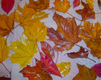 end OF winter sale-100 Real Fall Leaves Preserved for Art, Crafts. Weddings, Thanksgiving, Decorations