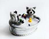 Bathing baby raccoons