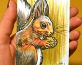 Squirrel Illustration ORIGINAL ACEO TW Feb Drawing Colored Pencils Kate Holloman