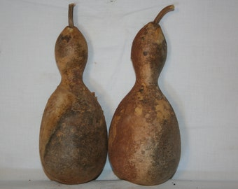 Two Large Penguin gourds, uncleaned