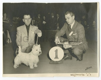 20th Century Dog Show - Vintage Silver Print 8x10 - Westminster, Ma - 1952