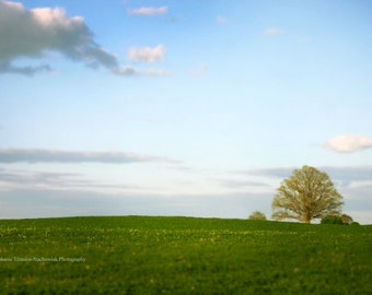 Summer, Blue, Green, Canva Wrap, Print, Spring, Landscape Earth Day, Nature Photography