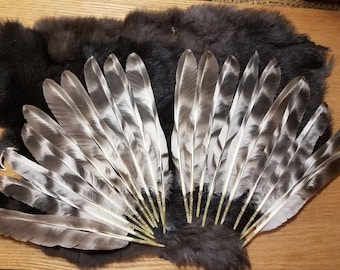 Striped Black and White Grizzly Pointed Wing Feathers - Lot of 20 - Rooster Feathers
