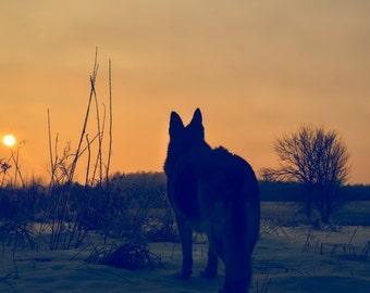 German Shepherd Photography  german shepherd silhouette,sunrise,copper,dog lovers decor,golden,beautiful shepherd,winter,frosty,snowy,snow