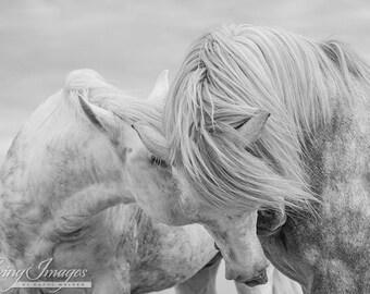 Two Camargue Stallions Together - Fine Art Horse Photograph - Horse - Camargue - Fine Art Print