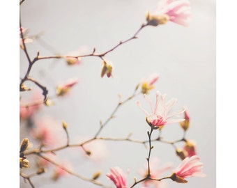 Spring Photography Flower Photo, flower decor, flower print, pink magnolia art nature print, fine art photography, flower nursery decor