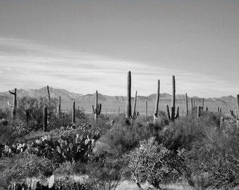Desert Photography Print Fine Art Arizona Saguaro Cactus Black and White Mountains Southwest Winter Landscape Photography Print.