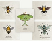 Organic Cotton Patches - Insects - 5 Designs to Choose From!