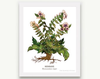 Botanical Henbane Print - Unmatted