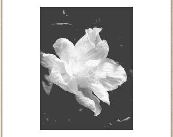 Large Wall Art Black and White Flowers Poster,Plotter Poster, Nature Photography, Modern Art Print, Urban Art, Large Botanical Art