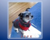 """NURSERY/INSPIRATIONAL ART  """"Hope"""", features our rescue Yorkie terrier mix. She exudes hope, waiting for a table scrap."""