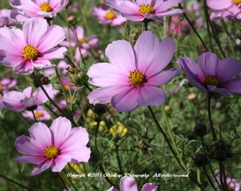 Cosmos in Shadow and Light