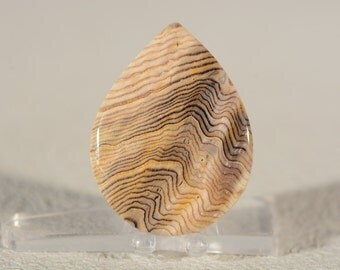 Hells Canyon Herringbone Petrified Wood Cabochon. Handcrafted USA. Natural Gemstone.