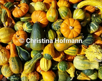 Mini Gourds and Pumpkins - instant digital download image - colorful gourds at Atkins Farms Country Market in Amherst, MA