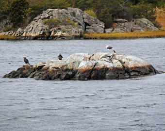 Nautical Art, Birds of Different Feathers - Ocean Scene at Newport, Rhode Island,