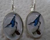 Nuthatch Silver Earrings