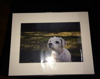 dog blinking in sunlight photo print photography 11x14