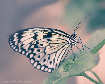 Butterfly Photography, Art for Child's Room or Nursery, Animal Decor - Fine Art Photographic Print