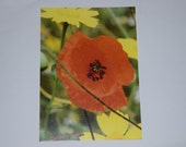 Poppy after the rain. Set of 5 Postcards. Suitable for use as compliment cards, invitations or notecards. Printed on semi-gloss card.A6 size