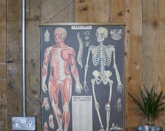 Anatomy Chart Wallhanging