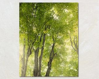 Rustic Nature Photograph, Green Tree Artwork, Vertical Art Print, Retro Forest Photo, Cabin Decor, Summer Photography