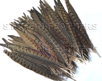 Wholesale / bulk feathers - RINGNECK pheasant tail feathers, natural speckled brown / loose feathers/ 9-12 in (22.8-30.5 cm) long, FB151-9