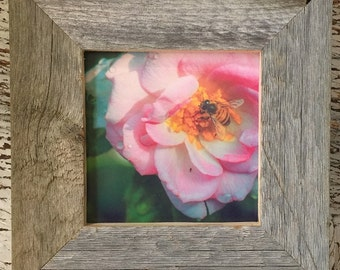 Framed Rose Photography/Barn wood/Rustic/FREE SHIPPING