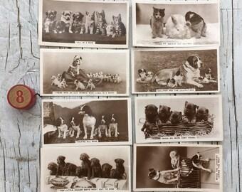 Original vintage Animal Studies cigarette cards, a part set of 8 puppies cards. 1930s. Photographic cards.