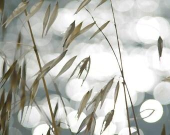 Nature Photography Art Print - Wild Grass