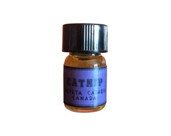 how to make catnip essential oil