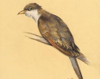 Yellow-Billed Cuckoo/ original pastel/ bird art/ gift for birders/ wildlife drawing/ naturalistic art