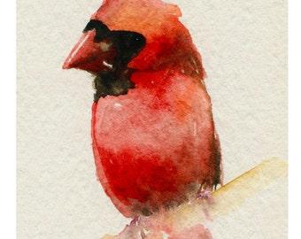 Cardinal Bird Art Print  8X6 inch Bird #99