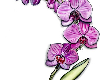 Orchids - Single Print - Framed Print