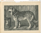 SALE Vero Shaw - Antique Dog Print - Original lithograph  - 1881 Book Of The Dog - Leonberg Dog