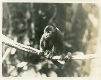 Cute monkey on tree branch antique photo