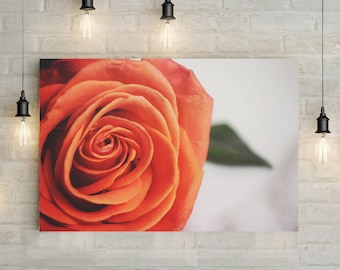 Pink Orange Rose Canvas Art, wall art canvas, canvas print, nature art, nature photography, nature prints