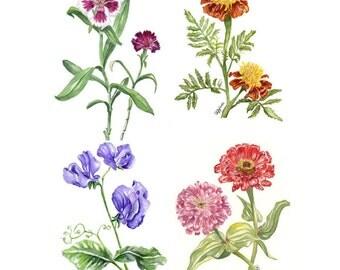 Botanical prints, set of 4