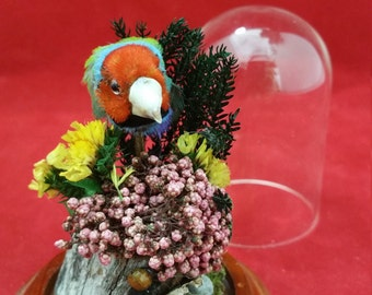 Taxidermy Gouldian Finch Antique Victorian Style Glass display dome