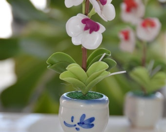 Small White and purple Phalenopsis Orchid