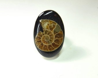 Ammonite Fossil Statement Ring // Curio Keepsake // Adjustable Sterling Silver // Real Fossil Resin Specimen No. 64