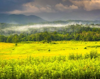 Fog at sunrise, at Cade's Cove, in Great Smoky Mountains National Park, Tennessee.   Photo Print, Stretched Canvas, or Metal Print.