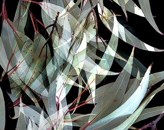 Australian Gum Leaves - Black Avalon from www.ashleeellendesign.com