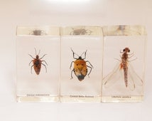 Bug specimens preserved in lucite / insect entomology / preserved insects / home decor / insects for home decor / collection / apothecary