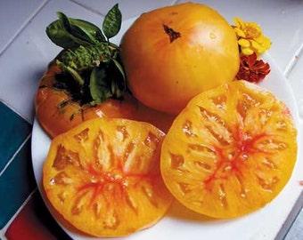 Tomato Plant, Marvel Stripe